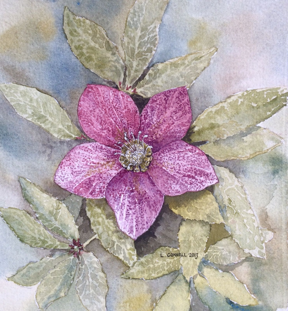 Helebore original watercolour by Louise Connell